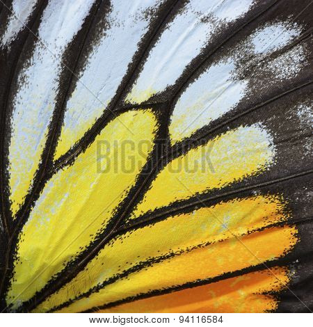 Yellow And Orange Butterfly Wing