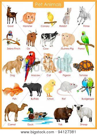 Chart of pet animals