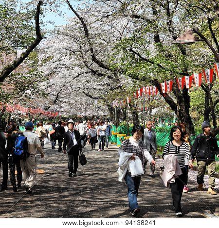 Tokyo - Cherry Blossom