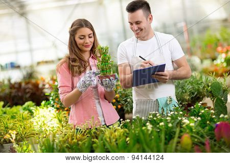 Worker couple in nursery greenhouse with flowers