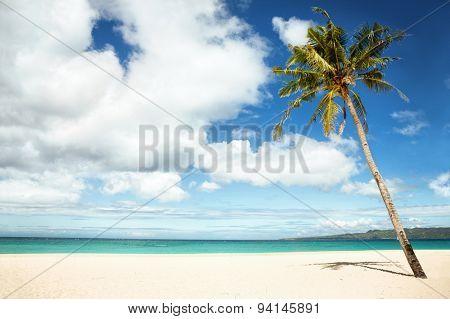 Empty tropical beach with palm under a blue sky