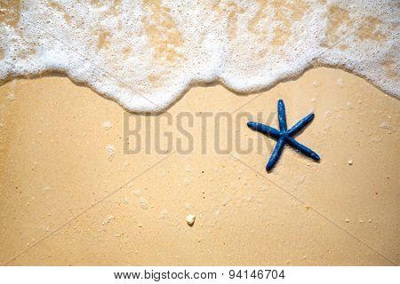 Blue starfish on the sandy coast