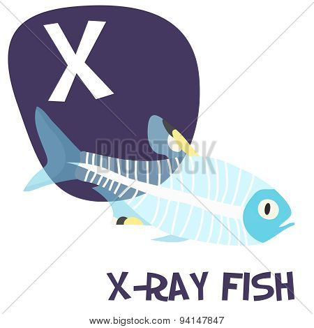 Funny cartoon animals vector alphabet letter set for kids. X is x-ray fish