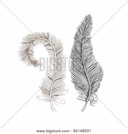 Vector hand-drawn feathers