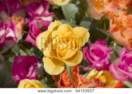 Yellow Rose In Coloured Bouquet