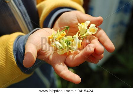 Nursery hand with flower