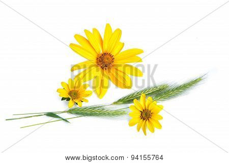 Yellow flowers and cereal plants