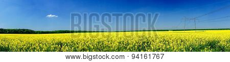 Fine Panorama Of  Rapefield And Blue Sky.