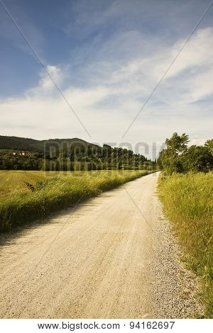 Pathway In Tuscany Countryside (italy)