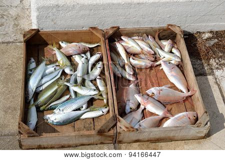 Freshly Caught Fish On The Market.