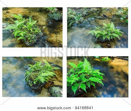 Collection Of Vegetable Fern And Green Grass On Stone In Stream.