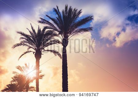 Palm Trees And Shining Sun Over Cloudy Sky