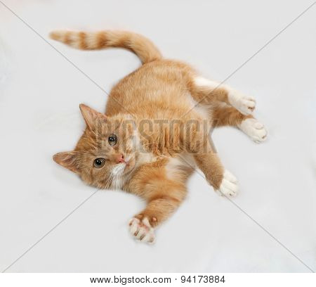 Ginger And White Cat Lying On Gray