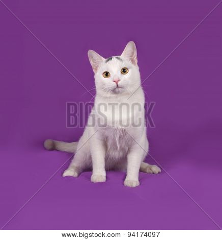 White Cat With Gray Spots Sitting On Lilac