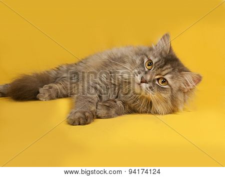 Gray Fluffy Cat Lies On Yellow
