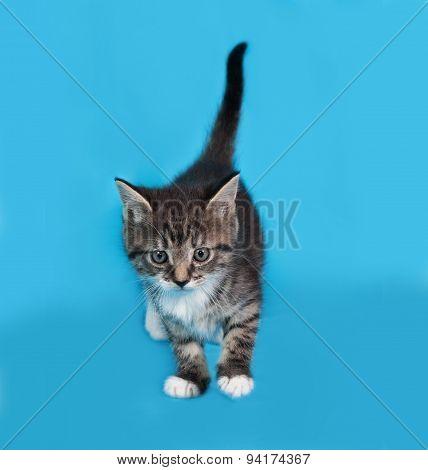 Little Tabby And White Kitten Going On Blue