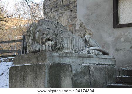 Lion statue in Lviv