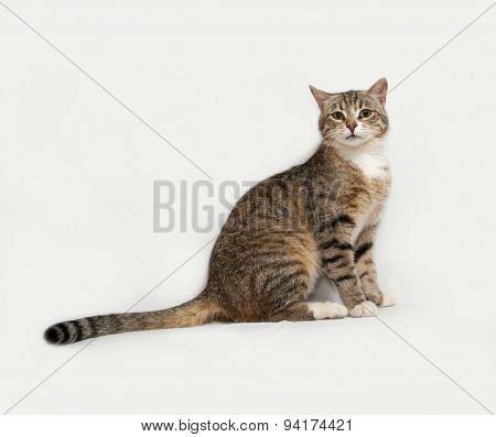 Gray Striped Cat Sitting On Gray