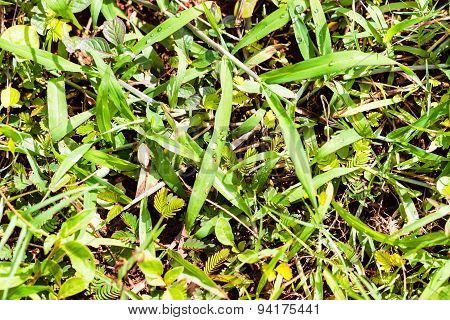 Wild grass & touch-me-not plants growth on the soil