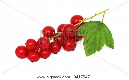 Bunch Of Ripe Redcurrant With Green Leaf (isolated)