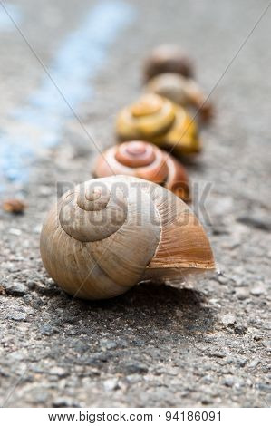 Snail crawling slow on asphalt