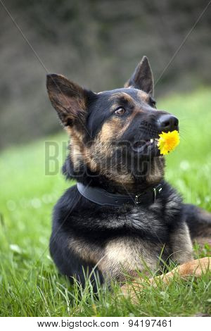 Funny Dog with Flower - dislike gifts