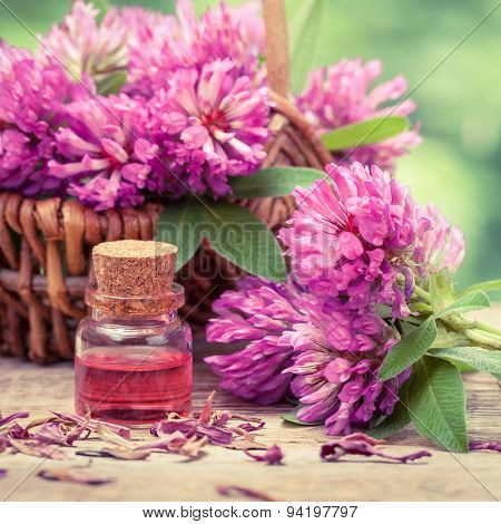 Bottle Of Elixir Or Essential Oil And Clover In Basket.