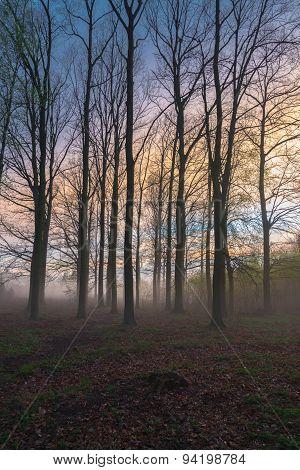 Beautiful Misty Evening