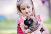 pic of little puppy  - Little girl with puppy belgian shepherd malinois in hands - JPG