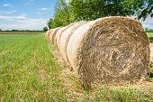 picture of hay bale  - Hay bales in line drying in the sun - JPG