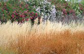 image of dry grass  - Close up background of dry grass and flowers - JPG