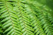stock photo of fern  - Close up of fern leaves - JPG