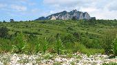 stock photo of pieniny  - Tri koruny mountain in Pieniny national park behind the green hills - JPG