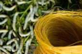 stock photo of silk worm  - Raw unprocessed silk yarn from yellow cocoons of the silk worm - JPG