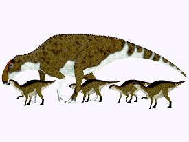 picture of herbivore  - Brachylophosaurus was a herbivorous hadrosaur dinosaur that lived during the Cretaceous Period of Alberta Canada and Montana North America - JPG