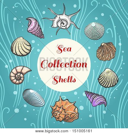 Sea shells hand drawn illustration. Beach aquatic vector shell composition with text