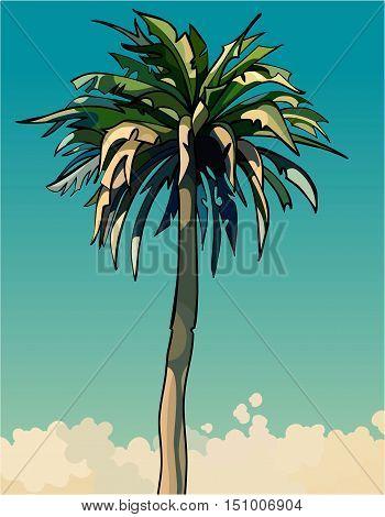 cartoon drawn tall sprawling decorative palm tree