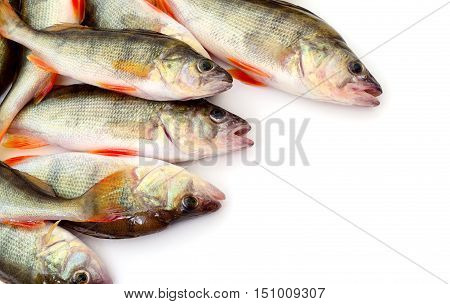 Striped perches fish isolated on white background.