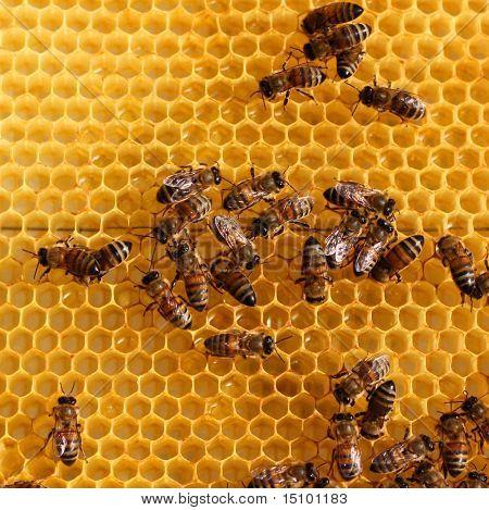 Wabe und eine Biene arbeiten