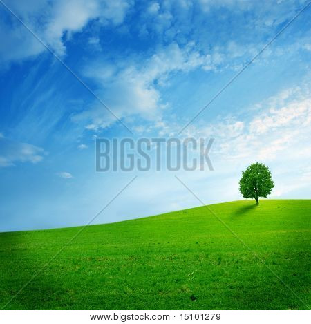 Solitary tree  on the green field