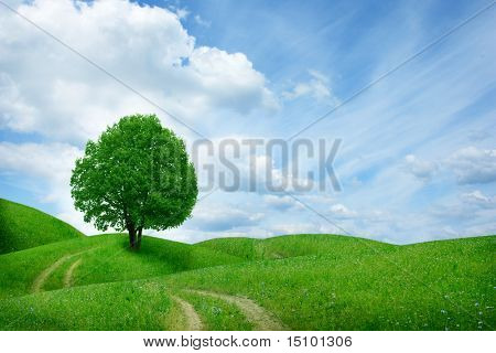 tree in green meadow