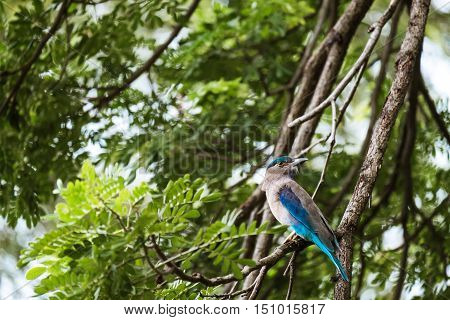 A Blue Bird on Branches of Trees with Bokeh