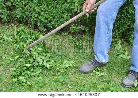 Gardening With Rake
