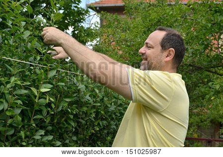 Man Cutting The Hedge