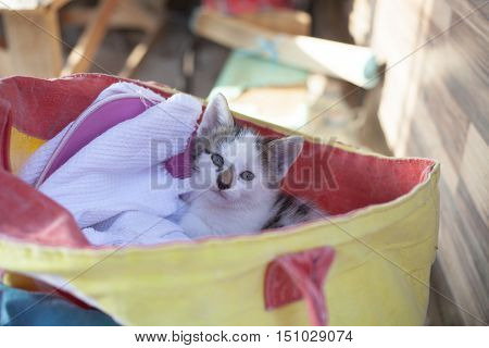 Little kitten in a yellow bag and hid peeps.