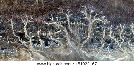 Petrified Forest, surreal landscapes of deserts of Africa from the air, mirages in the African desert, rock formations bird's eye view, textures branches, roots and trees,