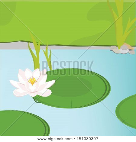 Vector illustration beautiful pink water lily or lotus flower on green leaf in water lake or pond