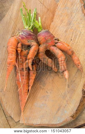 Carrots, with octopus like legs or tentacles