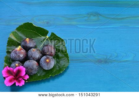 Seven ripe blue figs and pink flower on big mulberry leaf over blue wooden background with copy space view from above