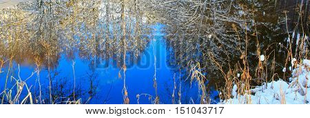 Frosty tree in the winter scenery . Winter landscape of frozen trees illuminated.